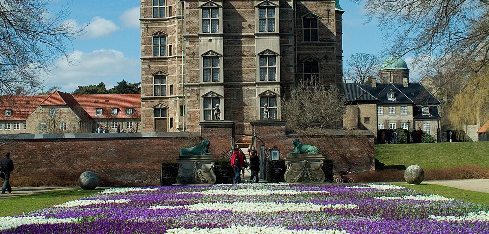 Krokustæppe i Kongens Have. Foto: Styrelsen for Slotte og Kulturejendomme