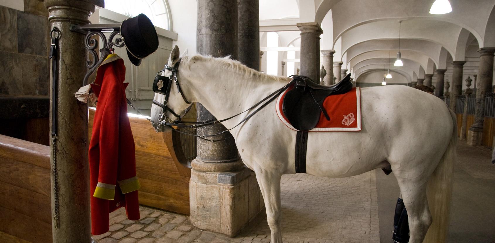 I De Kongelige Stalde pruster hestene de besøgende i nakken. Foto: Thomas Rahbek, SLKE